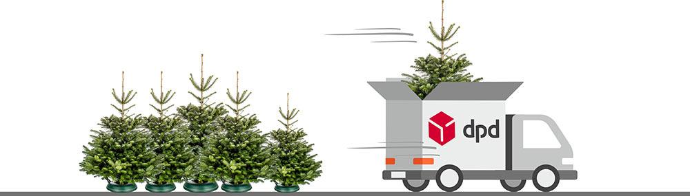 Kostenloser Weihnachtsbaumversand f�r deinen Christbaum